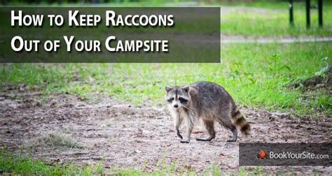how to keep raccoons away from your csite the road map