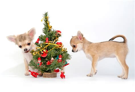 o christmas tree decorating for the winter holidays when