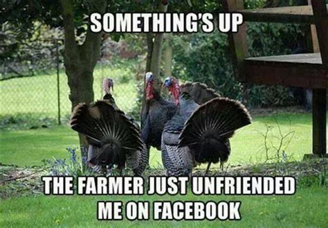 Thanksgiving Turkey Meme - funny thanksgiving pictures turkey images pics