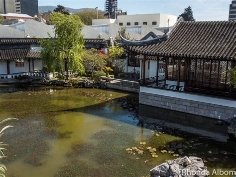 home design stores dunedin dunedin chinese garden authentic tranquil beauty albom
