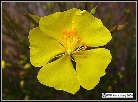 flowering shrub crossword flower terminology part 1