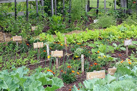 Garden Of Food 7 Best Reasons To Grow Your Own Food Grid World