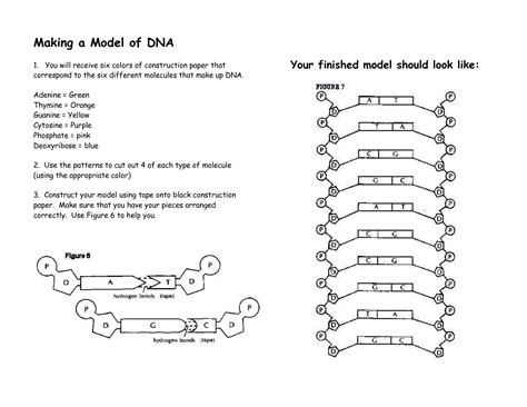 paper dna template 12 best images of dna model cut out worksheets dna model