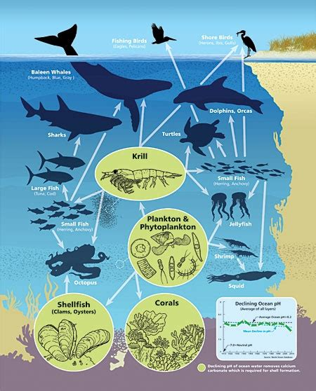 ecosystem food web diagram food web acidification poses grave threats to