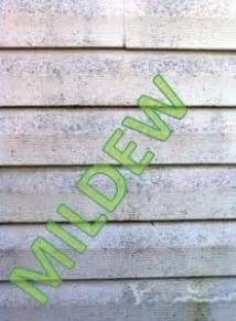 mildew on house siding remove mildew from house siding interesting finds pinterest