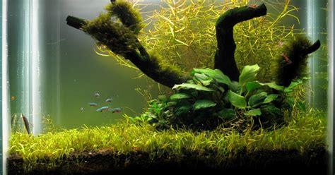 membuat aquascape mini cara membuat aquascape design mini aquascape