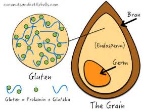Does Whole Wheat Have Gluten Old Time Remedies Health And Wellness What Is Gluten