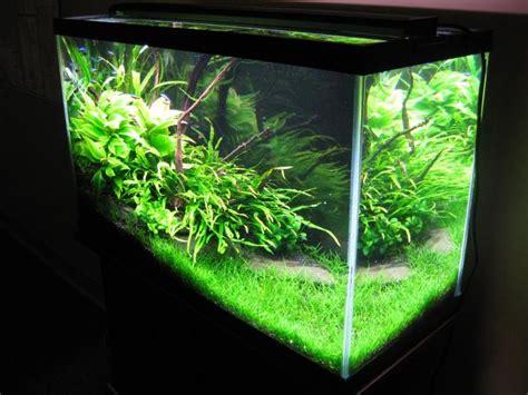 aquascape carpet plants 33 best images about low tech aquarium on