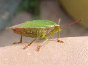 bug treer bugs wax on wax off