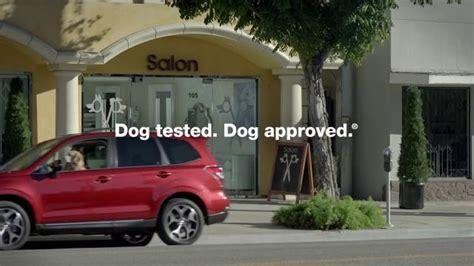 suburu hair salon dog suburu hair salon dog suburu hair salon dog subaru tv spot