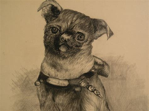 original pugs original black ink drawing of a pug dated 1894 from jbfinearts on ruby
