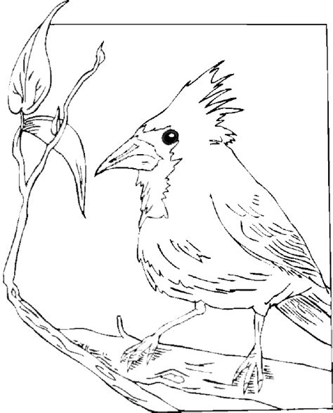 coloring pages of red birds free coloring pages of a cardinal