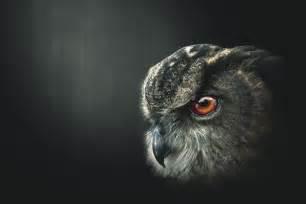 an owl s wisdom by saviourmachine on deviantart