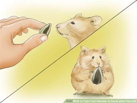 how to a to come when you call how to your hamster to come when you call 12 steps
