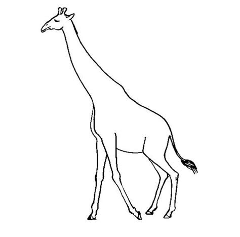 Giraffe Coloring Pictures by Giraffes Coloring Pages