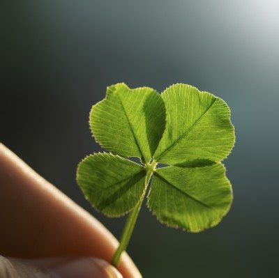 about four leaf clovers reasons for finding a clover
