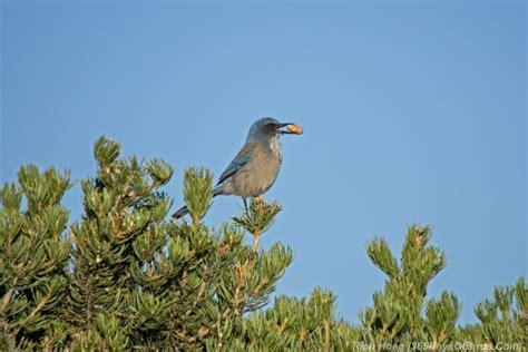 santa fe 365 days of birds
