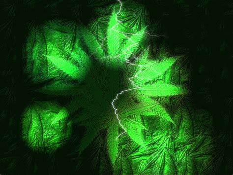 gif format wallpaper ganja gif find share on giphy
