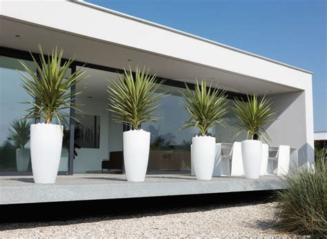 grote betonnen bollen tuin 25 beste idee 235 n over grote bloempotten op pinterest