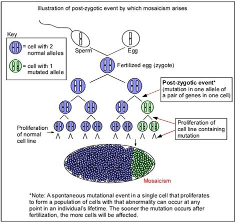 mosaic pattern in genetics swyer syndrome genetics home reference