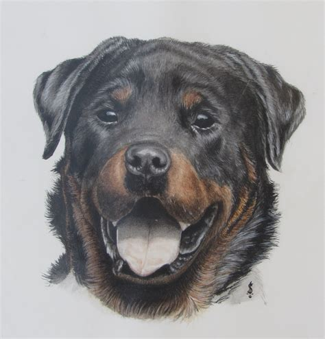 rottweiler drawings rottweiler by wirew on deviantart