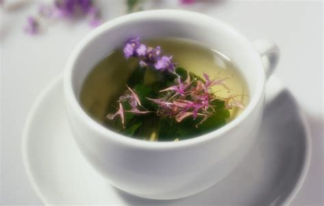 Herbal Tea is mold in your home you sick health