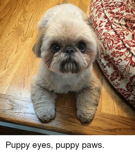 Puppy Dog Eyes Meme - 25 best memes about puppy eyes puppy eyes memes