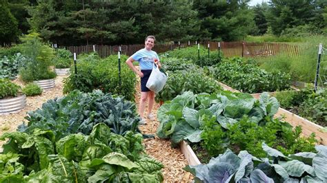 Vegetable Garden Weeds How To A Free Garden With No Work