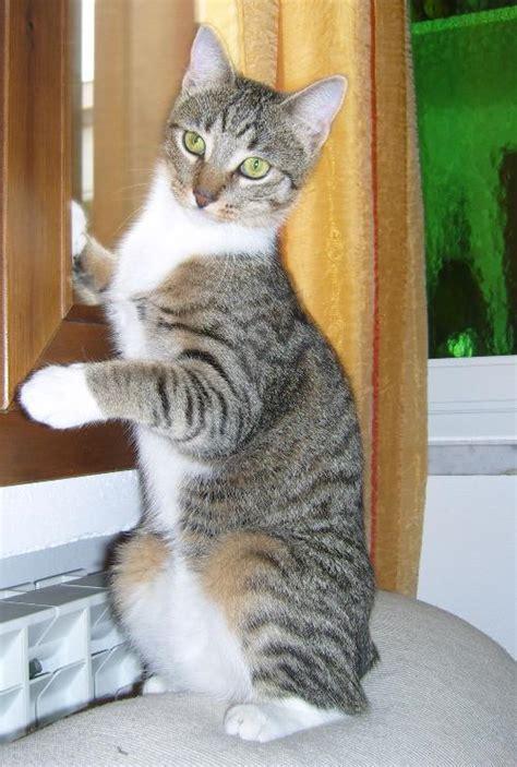 alimentazione naturale gatto nuovo menu alimentazione naturale gatto gatto