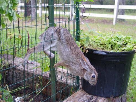 Rabbit Proof Vegetable Garden Photo Bunny Fence