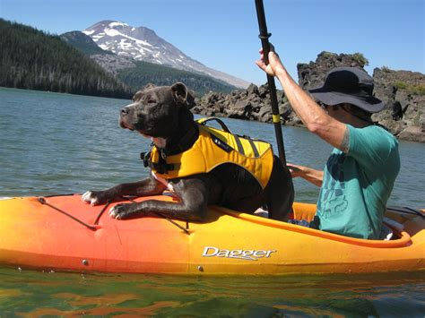 kayak for dogs kayakers rescue blind thrown into river kayak