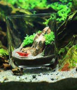 shrimp tank aquascape 113 best images about hobbies aquascaping on