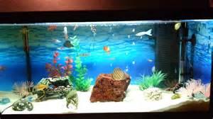 Best Tropical Fish Tank SetUP   YouTube