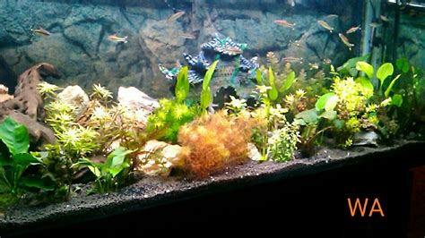 aquarium design exle wazeers aquariums wazeers aquariums home