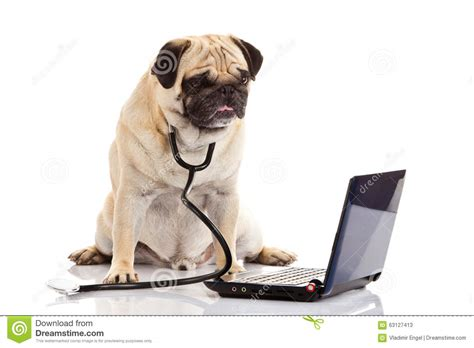 pug computer computer isolated on white background doctor stock image image 63127413