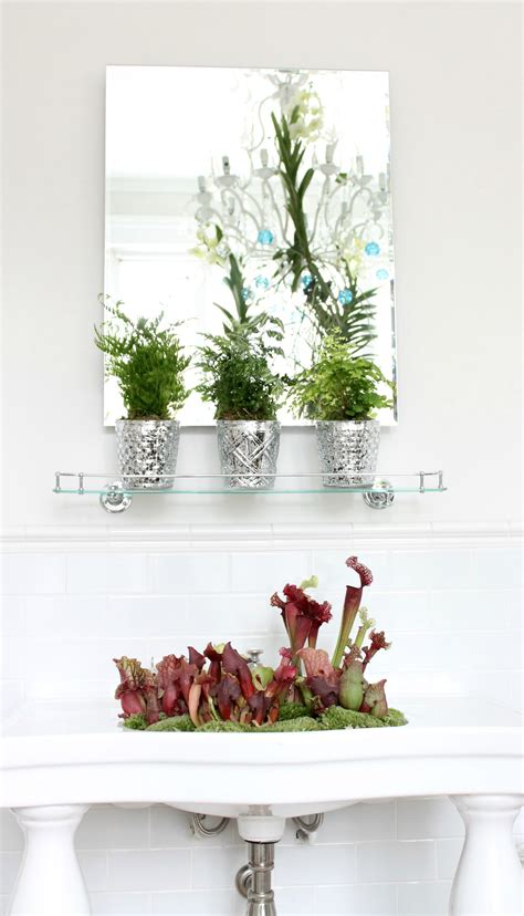 bathroom plants no light plants for bathrooms with no light 28 images best