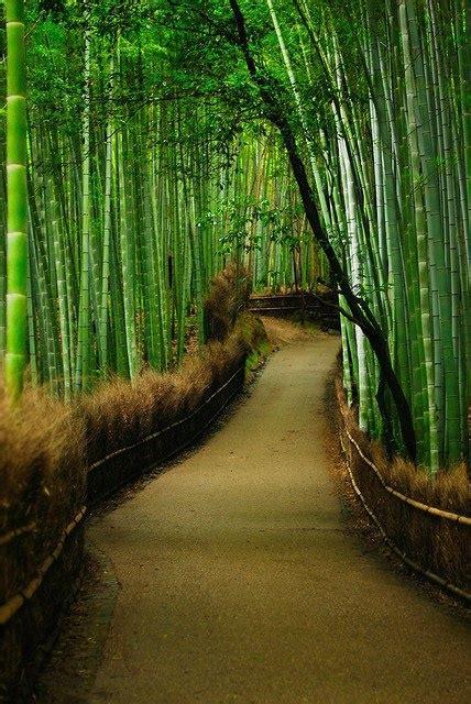 beautiful tree tunnels   visit