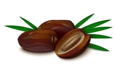 fruit dates date fruit seeds green dates