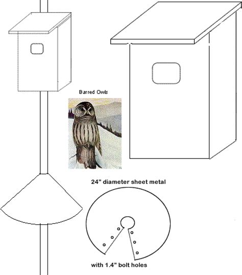 bird houses nesting box barred owls beauty of birds