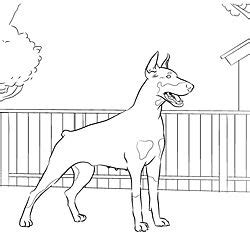doberman pinscher coloring page coloring pages for