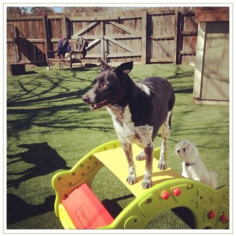 boarding fort collins pet boarding fort collins doggie daycare pricing and availability