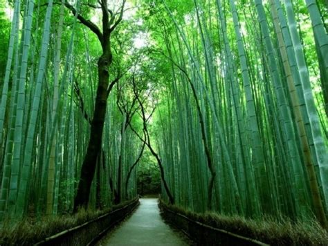arredamento in bambu arredare con il bamb 249 arredamento casa arredamento con