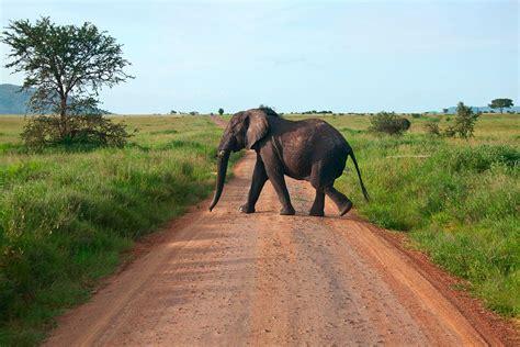 Syari Kanita kenia safari masai mara ekskluzywne wyprawy