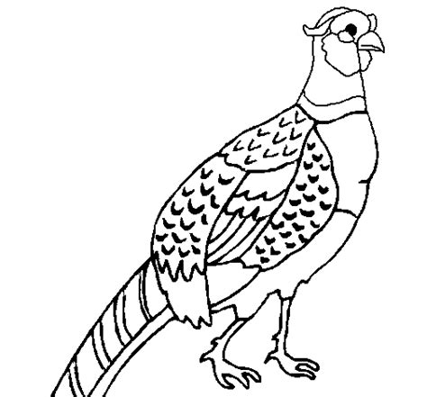 Free Coloring Pages Of Quetzal Color Quetzal Coloring Page