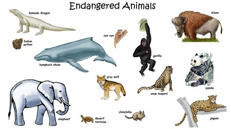 Endangered Animals Pictures And Their Names picture of endangered animals with names for hd