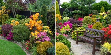 cespugli giardino piante da giardino i nostri consigli roba da donne
