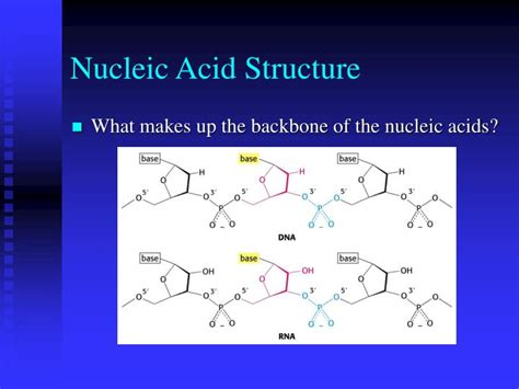 Ppt Dna Rna And The Flow Of Genetic Information Ppt Of Acid