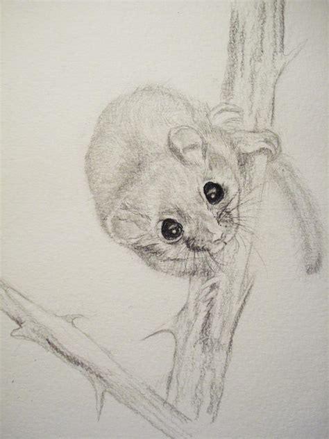In Dormouse Drawing by Hazel Dormouse By Skogsro On Deviantart