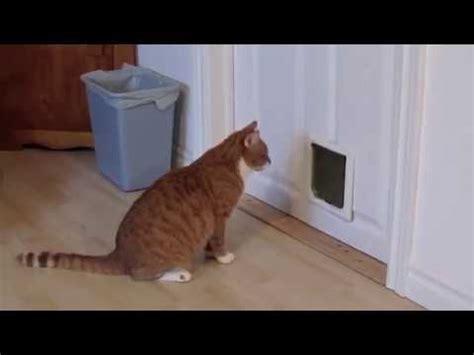 How To Make A Cat Door by How Not To Install A Cat Door