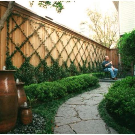 Trellis With Vines vines trellis espalier beautiful and backyards